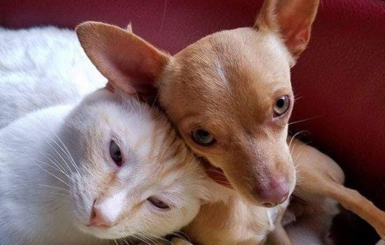 cat-dog-utah-no-kill-shelter