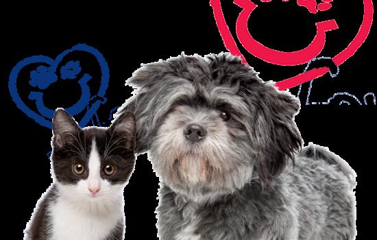 dog-cat-isolated-pflu-logo-accent